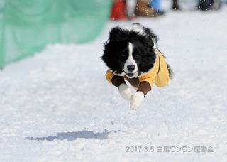 5237みるきー写真.jpg