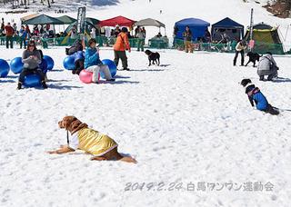 マーチ_1684椅子取りゲーム.jpg