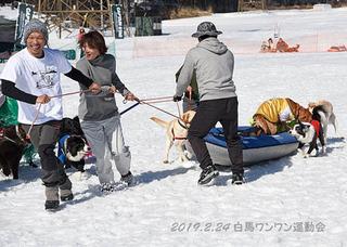 マーチ_1803犬ぞり競走.jpg