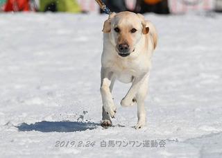 マーチ_7083オレオ.jpg