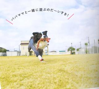 ミルキー愛犬の友-1.jpg