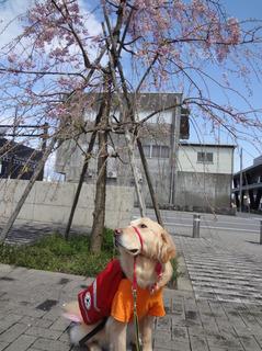 桜とオム.jpg