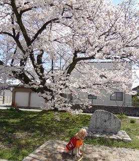 桜とオム2.jpg