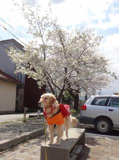 桜とオム3.jpg