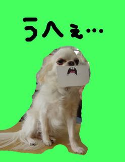 竹千代3.jpg